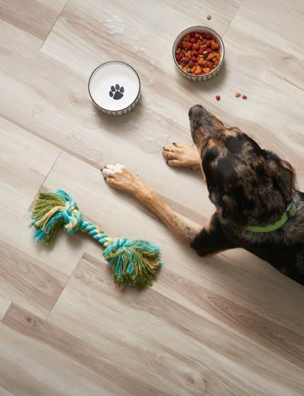 Dog on Vinyl flooring | Everlast Floors